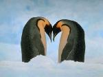 4883Jokes_Animal_in_love_.jpg
