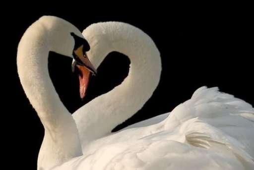 6243Jokes_Animal_in_love_.jpg