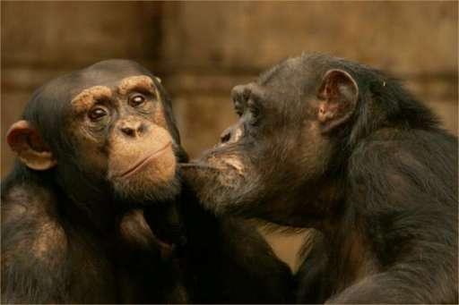 6343Jokes_Animal_in_love_.jpg
