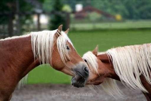 6793Jokes_Animal_in_love_.jpg