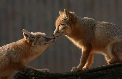 6853Jokes_Animal_in_love_.jpg
