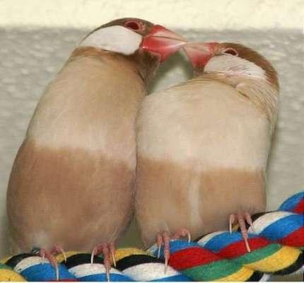 9453Jokes_Animal_in_love_.jpg